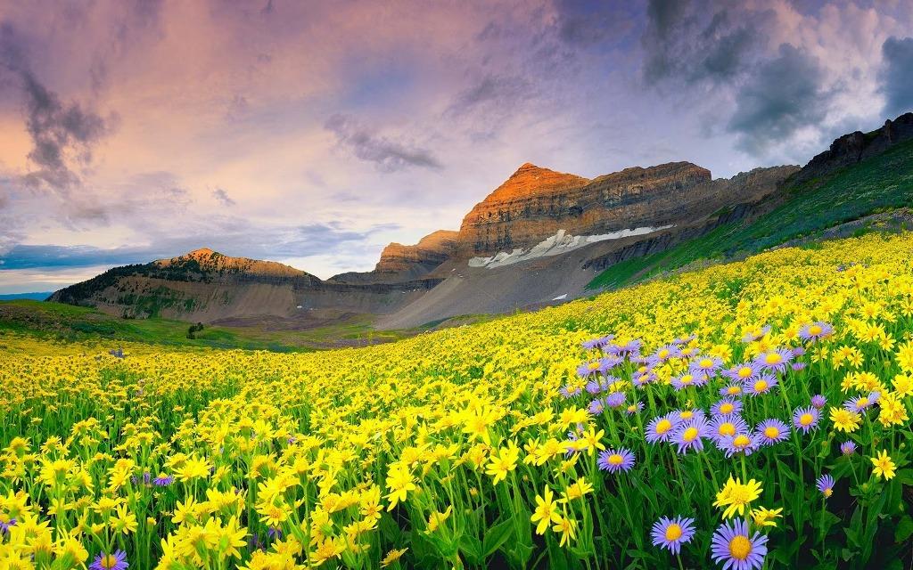 India - Valea Florilor