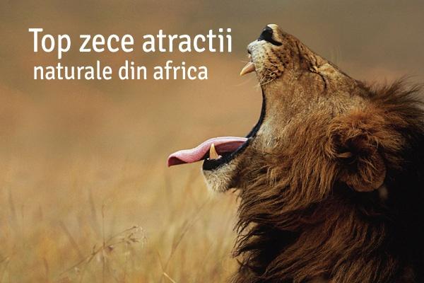 Africa 600x400