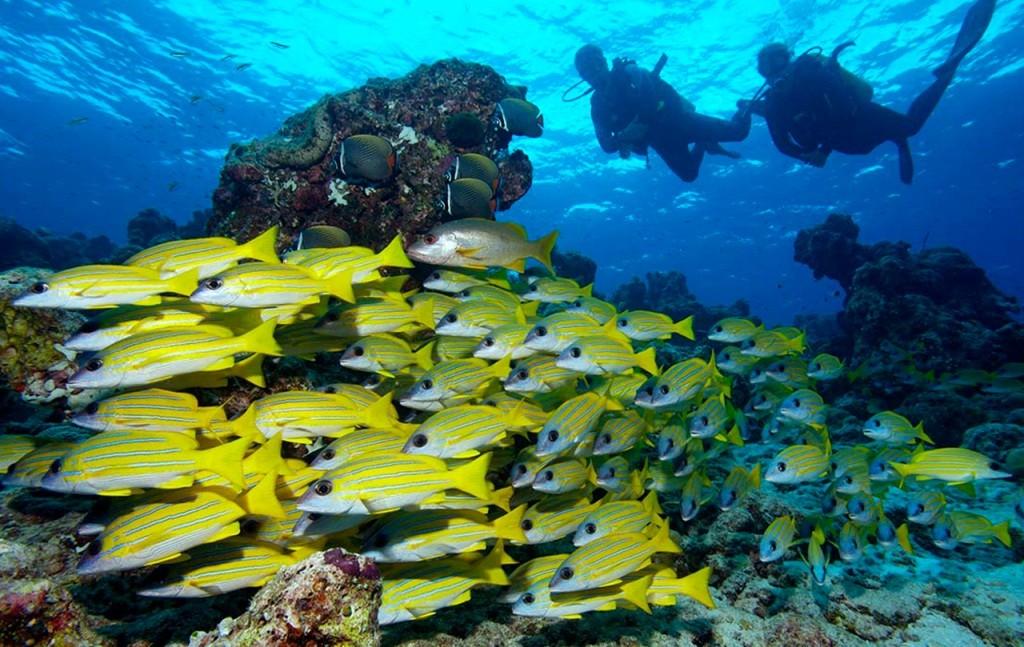 Scufundari Maldive