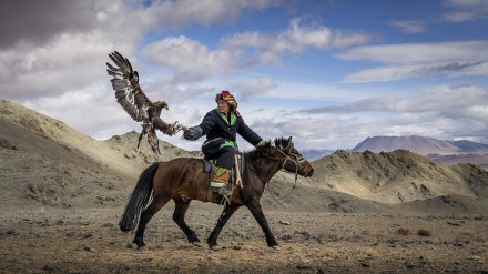 Mongolia eagle