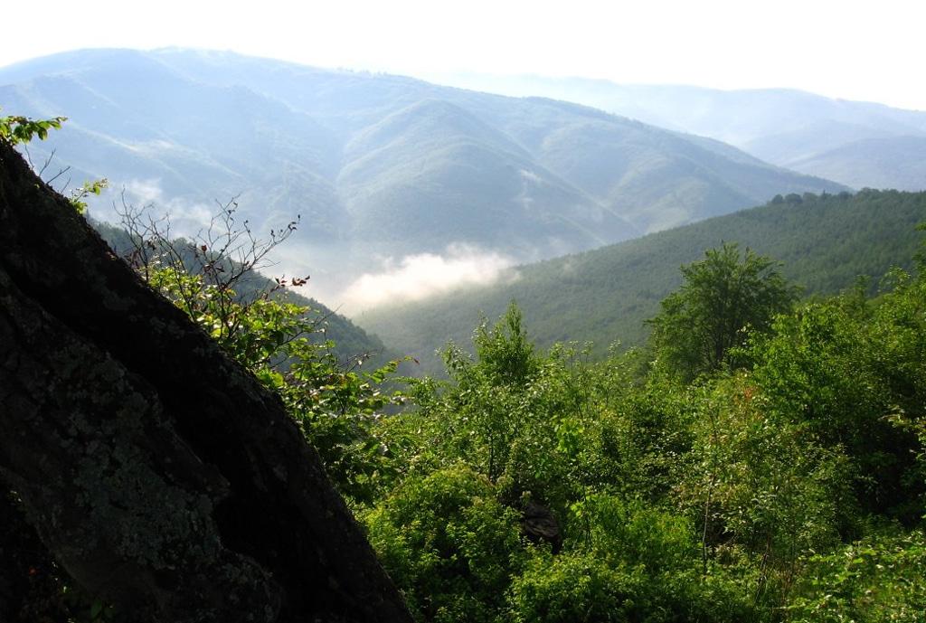 Rezervatia naturala Nemira