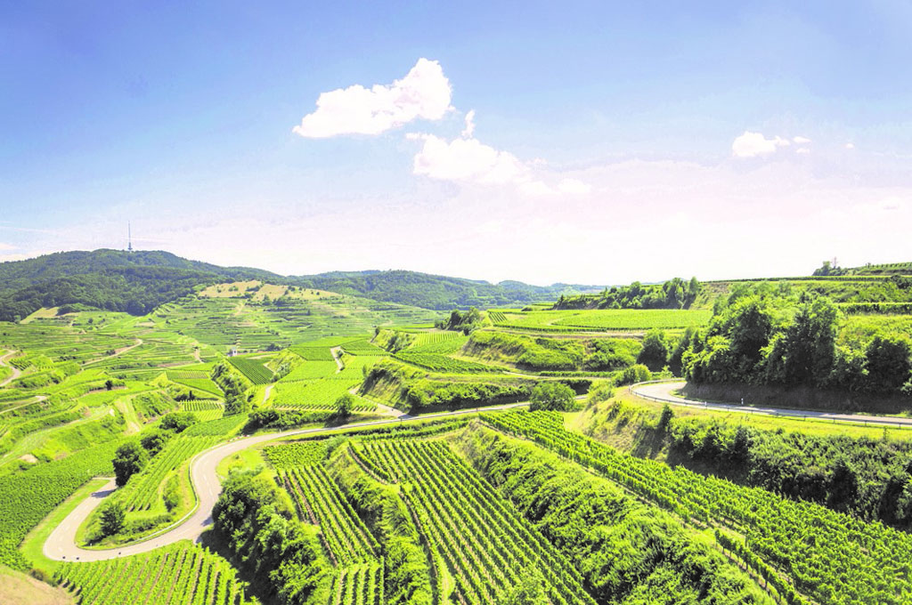 Baden Germany wines