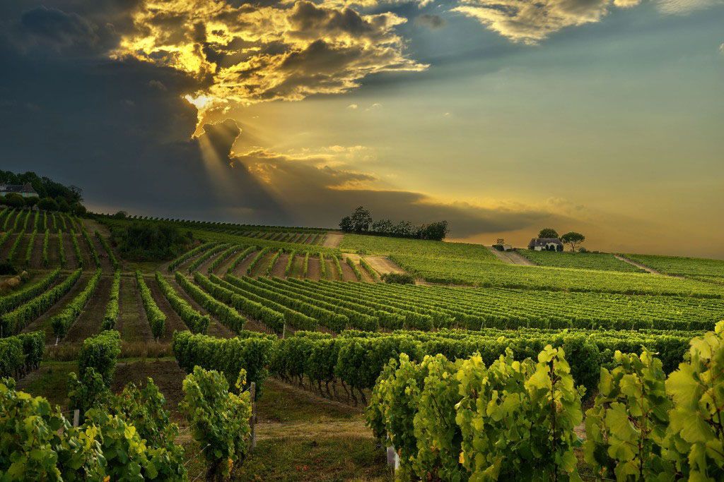 Cape Town Africa de Sud wines