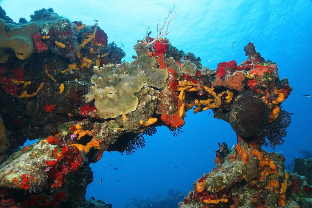 Insula Cozumel – Mexic