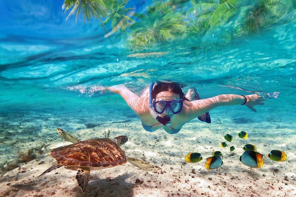 Scufundari - Snorkeling