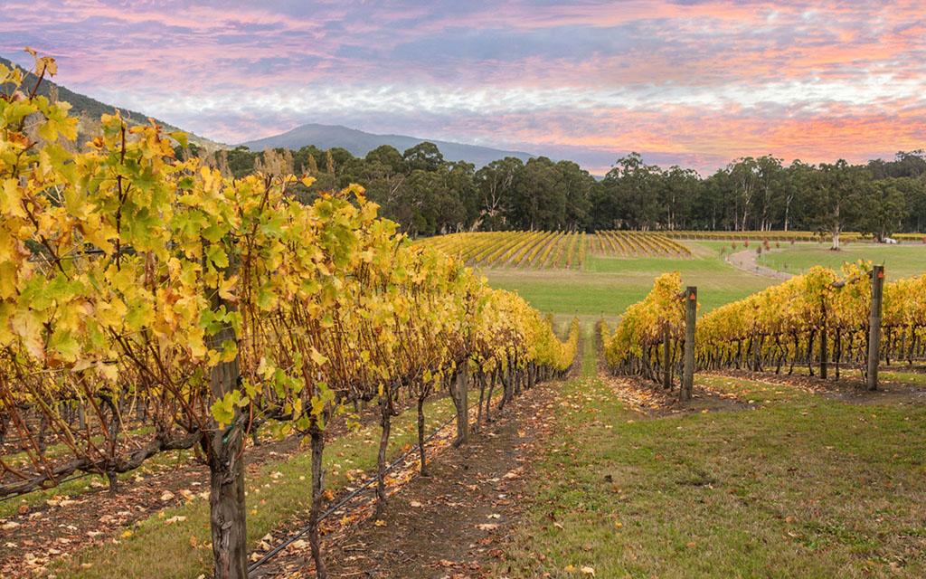 Yarra Valley Australia wines
