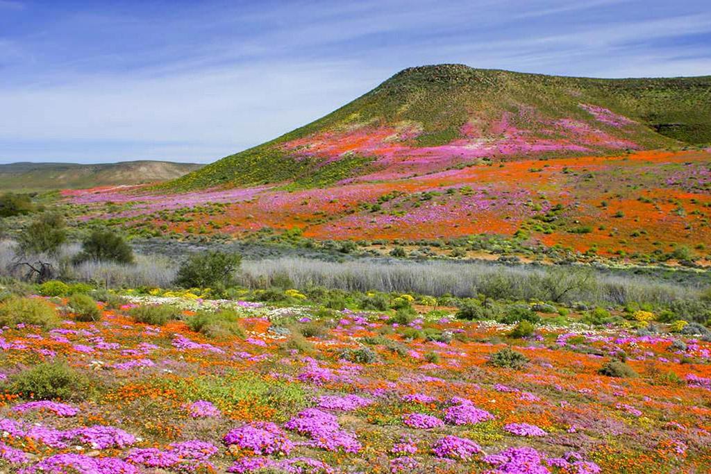 Namaqualand un paradis floral