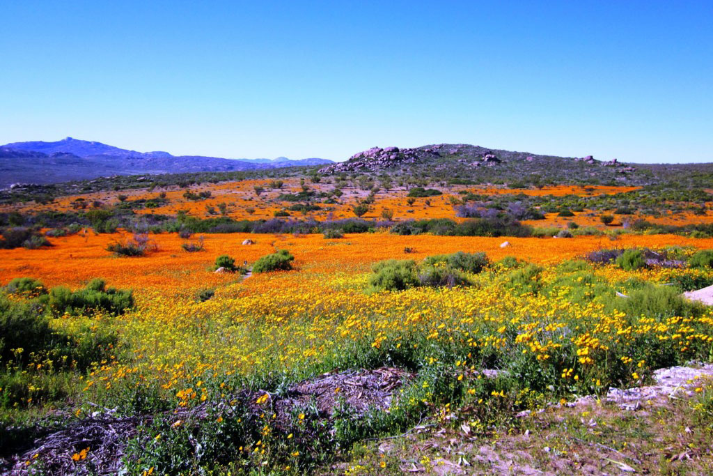 Paradisul din Namaqualand