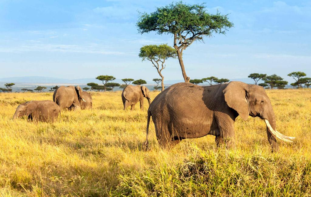 Obiective turistice Kenya